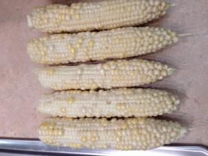 Damaged Sweet Corn