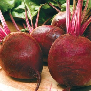 Harrier Hybrid Beets