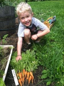 Young Carrot Gardener