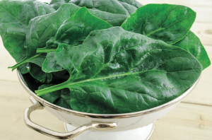 Gurney's Goliath Spinach