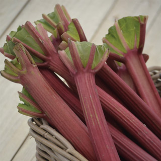 Chipman's Canada Red Rhubarb