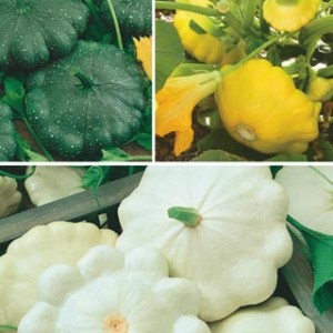 Scallop Hybrid Mix Summer Squash